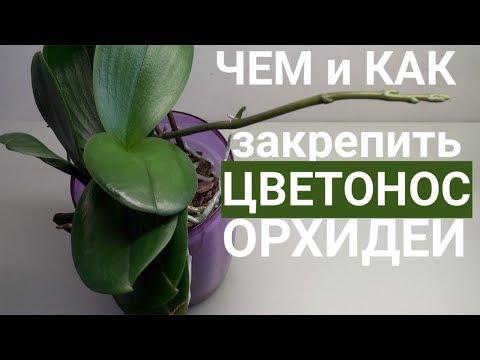 ЦВЕТОНОС ОРХИДЕИ