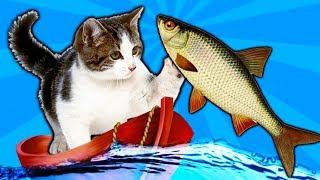 КОТЕНОК РЫБОЛОВ симулятор кошачьей рыбалки видео про маленького котенка как   игра