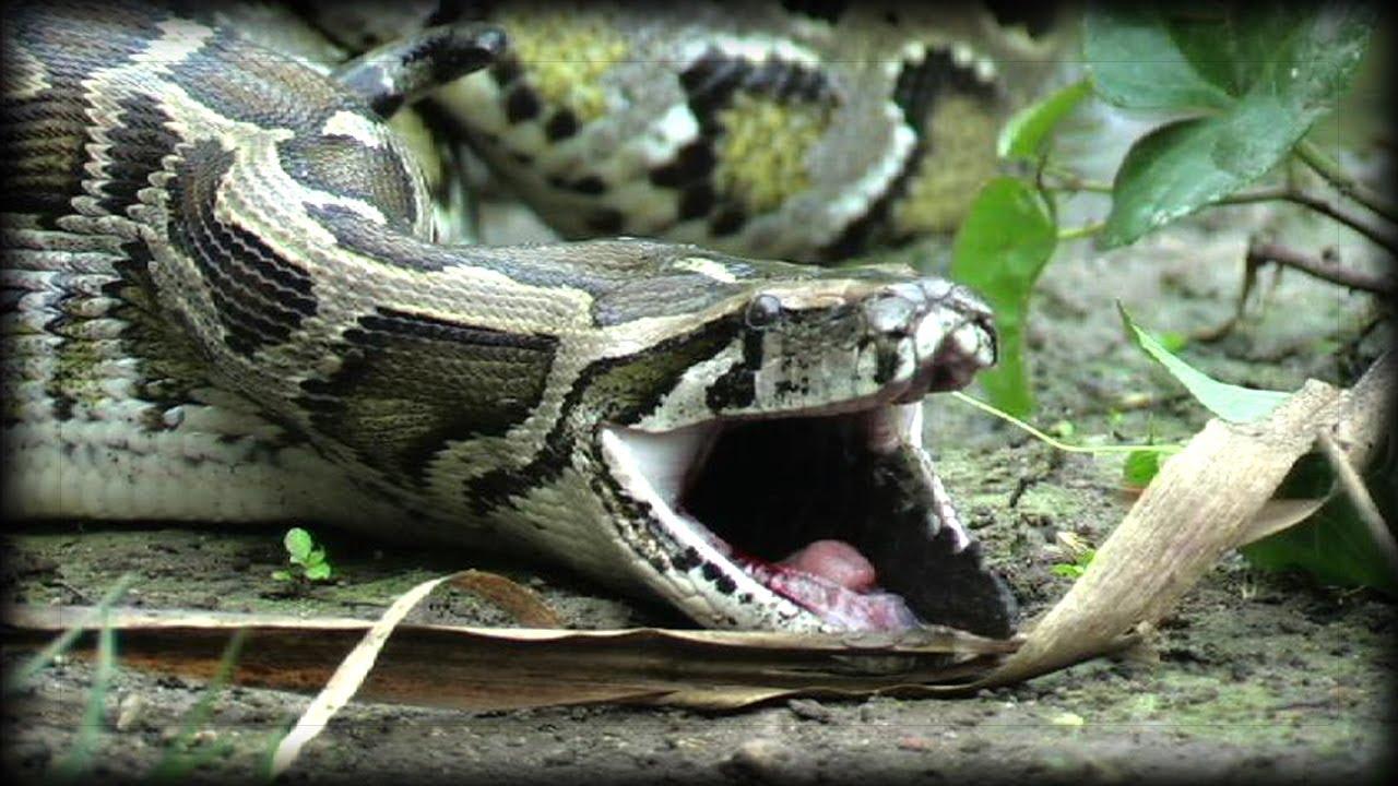 Αποτέλεσμα εικόνας για python attack