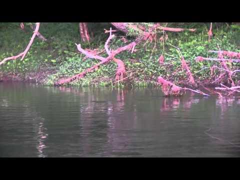 Hendrickson Spinners, West Branch, Delaware River