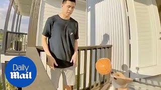Corgi in Texas makes amazing basketball trick shots