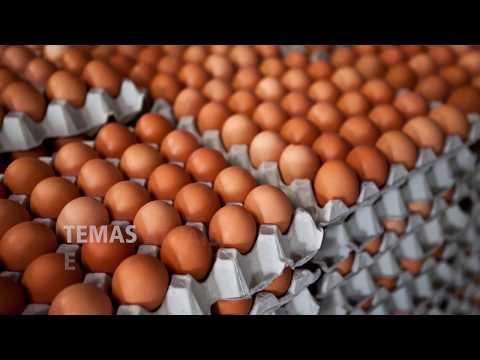 2ª Conbrasul Ovos 2019 - Conferência Brasil Sul da Indústria e Produção de Ovos