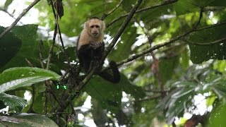 Regis University Student Travel Learning - Primate Ecology and Behavior