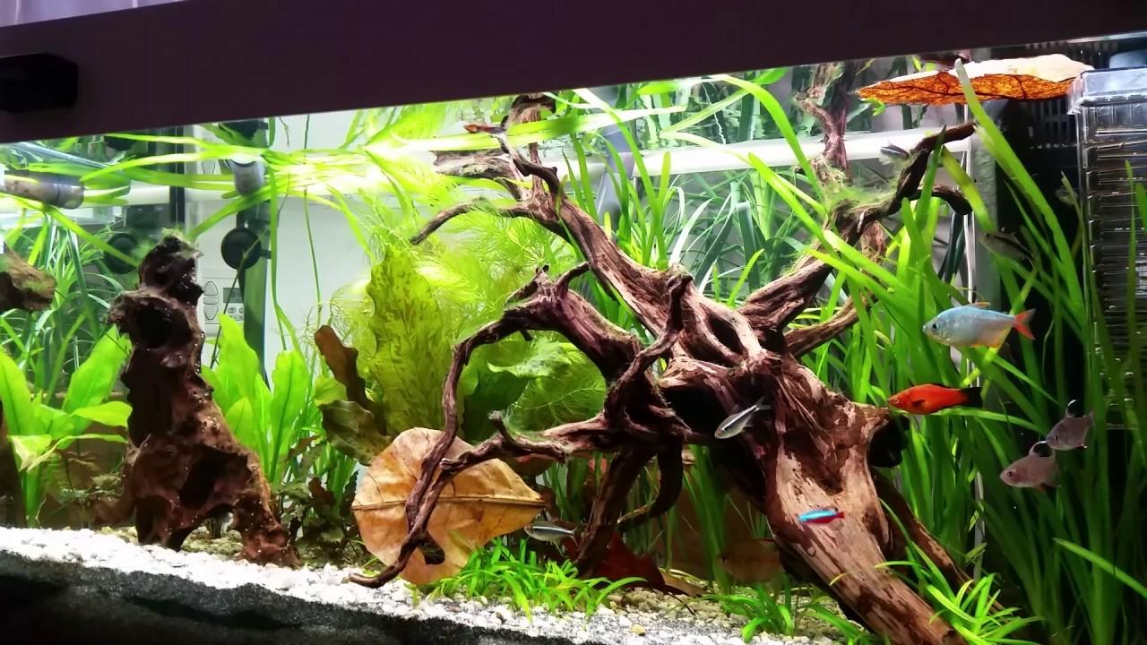 juwel rio 125 s wasseraquarium led youtube. Black Bedroom Furniture Sets. Home Design Ideas