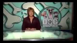 Dog Tamers On Aca Ch: 9 - Justin Booth