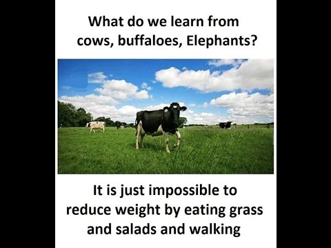 What do we learn from Cows, Buffaleos, Elephants for Weightloss?