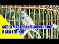 6 Jam Non Stop Suara Blackthroat Masteran Kenari Ngobra(.mp3 .mp4) Mp3 - Mp4 Download