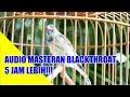 Suara 6 Jam Non Stop Suara Blackthroat Untuk Masteran Kenari Kicau Mania(.mp3 .mp4) Mp3 - Mp4 Download