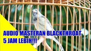 NON STOP 6 JAM MASTERAN BLACKTHROAT PANJANG DURASI