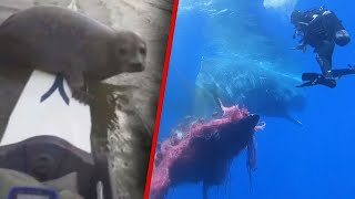Close Encounters with Sea Creatures