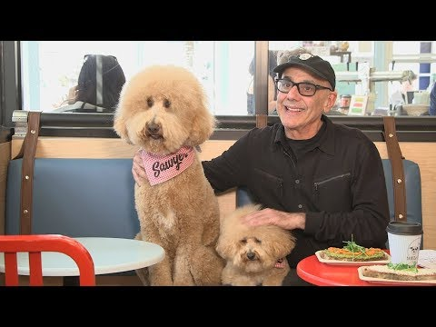 Doodles Visit New York City's First Dog Cafe