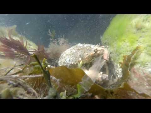 Snorkelling on Borth Reefs