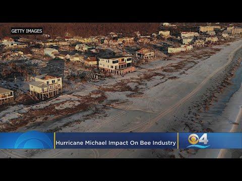 Florida Beekeepers Take Big Hit Due To Hurricane Michael