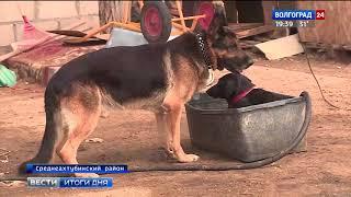 В Волгограде службы отлова сотрудничают с приютами для животных