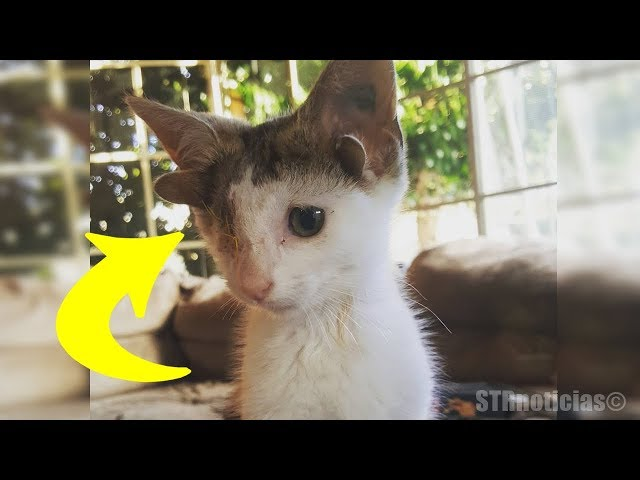 Encontraron a este pobre gatito debajo de una casa, pero al verlo de cerca quedaron impactados
