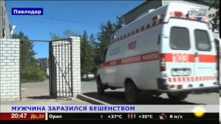 Мужчину с запущенной формой бешенства госпитализировали в Павлодаре