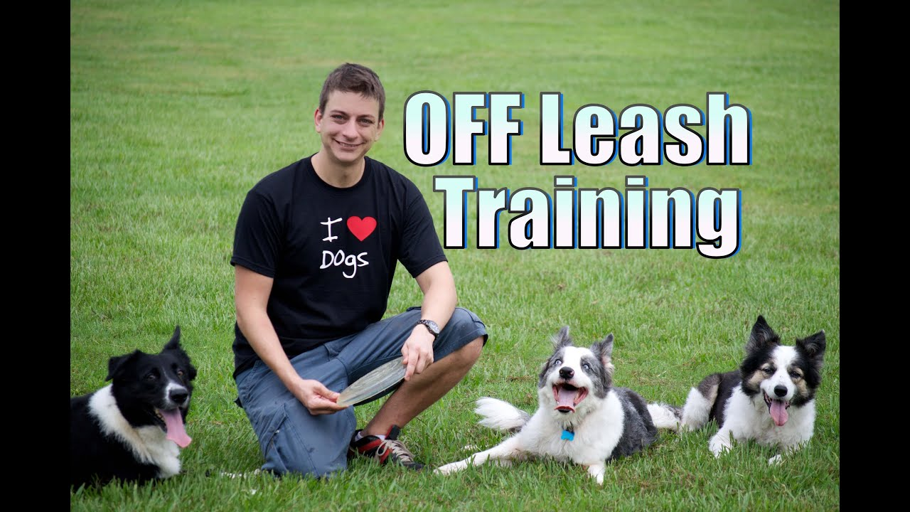 Zak George S Dog Training Videos