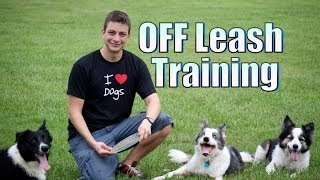 Do You Want Your Dog To Stay With You Off Leash?
