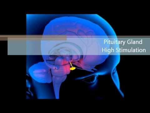 Pituitary Gland High Stimulation