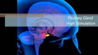 Pituitary Gland High Stimulation