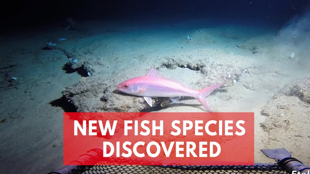 Twilight Zone Ocean >> Scientists Discover A Hidden Ocean Twilight Zone Filled With