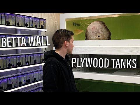 Fish Store Update! New Betta Display + Plywood Aquariums