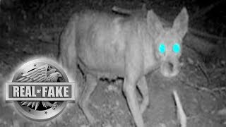 THE CHUPACABRA MONSTER - Real or Fake?