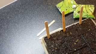 cheap LABELS for your young seedling containers - Gardening tip 101