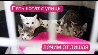Лишай у котят всё ещё есть. Борьке лучше.