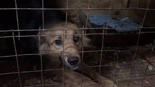 В Саратове приют для бездомных собак хотят признать вне закона