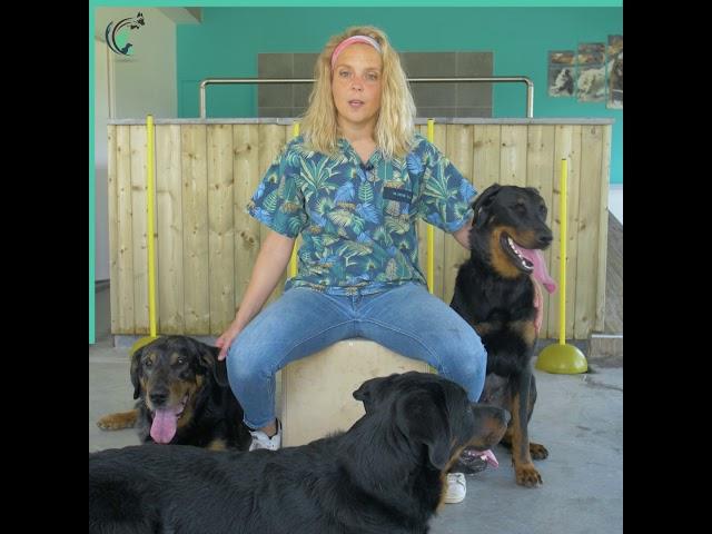 L'interview clinique de Manue   Clinique vétérinaire Saint Roch