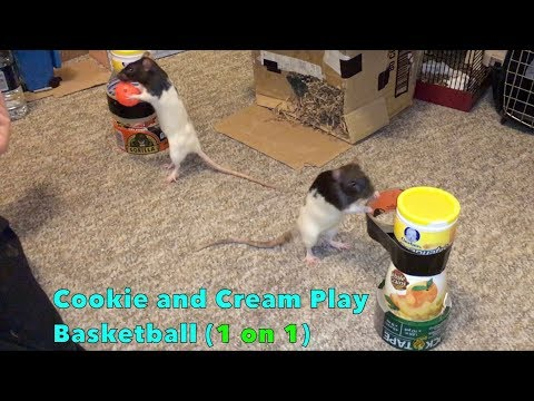 Cookie and Cream Play Basketball (1 on 1)