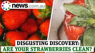 Disgusting discovery: the test to see if your strawberries are full of bugs