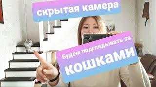 ЖИЗНЬ С МЕЙН-КУНАМИ / КУПИЛИ СКРЫТУЮ КАМЕРУ ДЛЯ КОШЕК