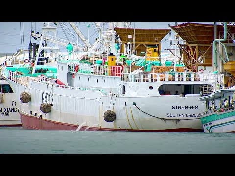 Are we fishing our oceans to death? - Indian Ocean with Simon Reeve - BBC