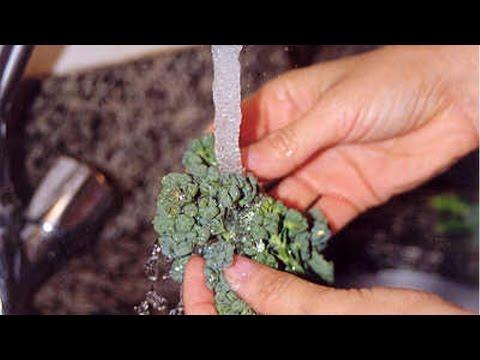 Alimentação Saudável -  Higienização