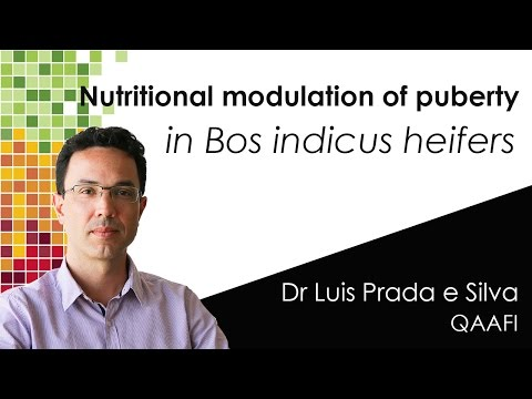NUTRITIONAL MODULATION OF PUBERTY in Bos indicus heifers
