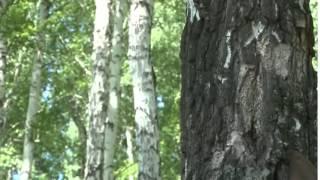 Фильм Озеро Данилово погружение в тайну