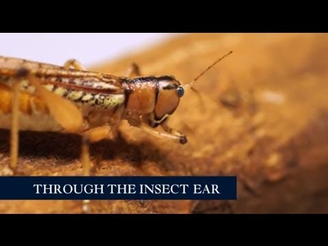 Through the insect ear at the Royal Society Summer Science Exhibition 2014
