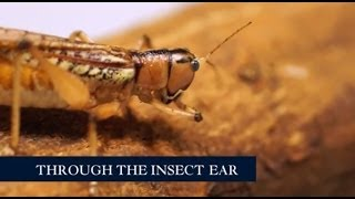Video Through the insect ear at the Royal Society Summer Science Exhibition 2014 download MP3, 3GP, MP4, WEBM, AVI, FLV April 2018