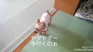 保護犬アンジーは普段おとなしくて自分からワガママや要求はしませんが...