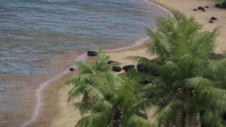Tanoa Nature Scenes (Dev Diary B-Roll)