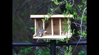 ф Make It - Mid-century Modern Squirrel House
