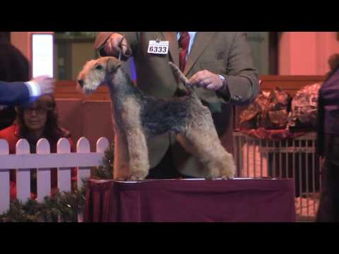 Ladies Kennel Association 2016 - Terrier group FULL