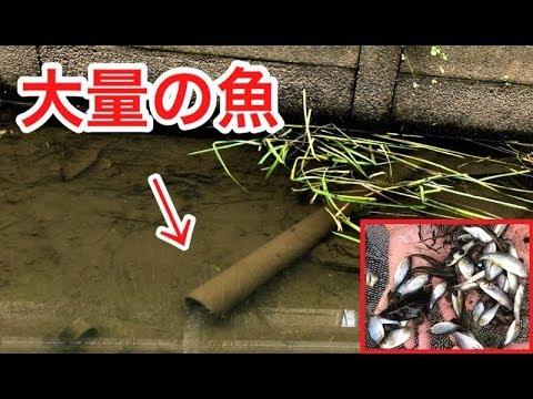 用水路に沈んだ土管を持ち上げると…中から大量の魚が!!