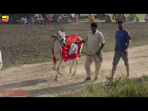 OX (ਵੱਛੇ) RACES 2018 🔴 4th 🔴 ਬੈਲ ਗੱਡੀਆਂ ਦੀਆਂ ਦੌੜਾਂ बैलों की दौड़ें  بیلوں کی دودن  at DAUDHAR Moga