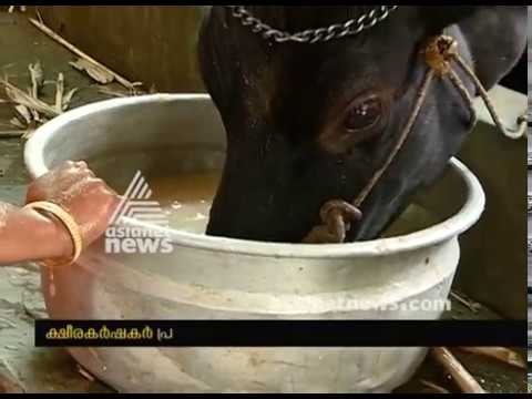 Increasing price of Cattle Feeds; Cattle Farmers in crisis