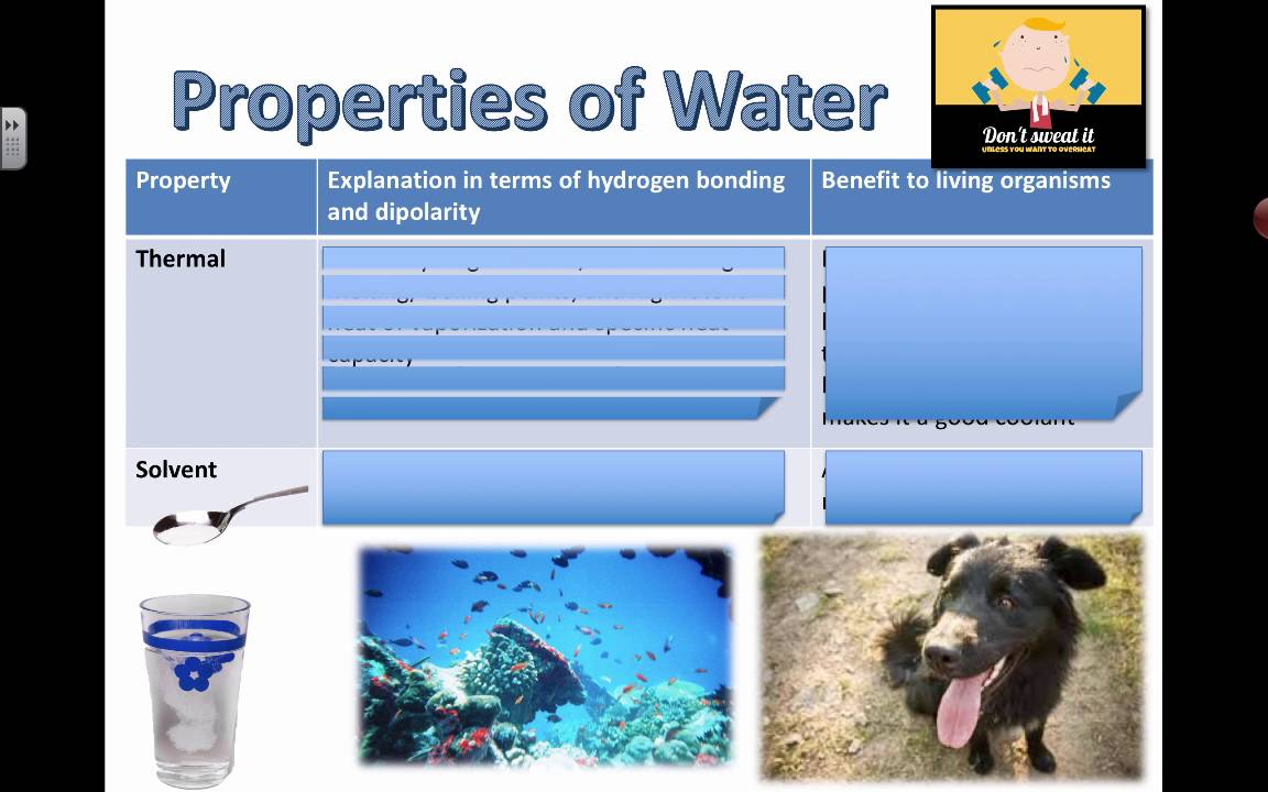 Properties of Water and Benefits (2016) IB Biology - YouTube
