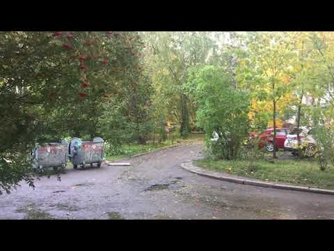 Сосновый бор Ленинградская область 2019 Ветерок