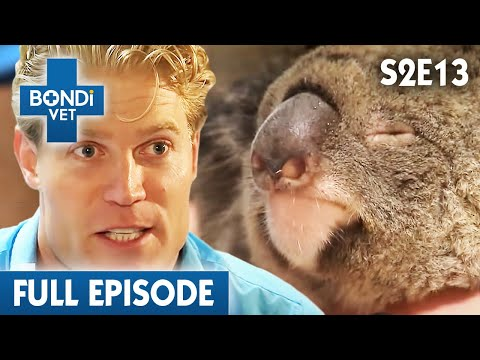 Depressed Koala Mum | S02E13 | Bondi Vet